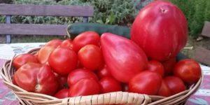 Pomidory z ogrodu przy Villi Fiori