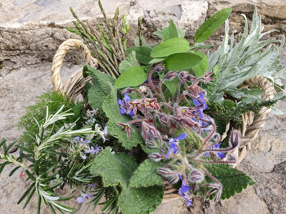 Ogrodowe zioła