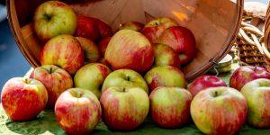 Jesiennie risotto z jabłkami